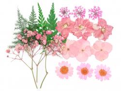Planche de 20 fleurs...