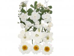 Acheter Planche de 18 fleurs pressées - mixte blanc - 7,99€ en ligne sur La Petite Epicerie - 100% Loisirs créatifs