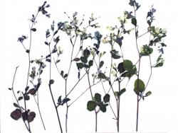 Planche de 12 fleurs...