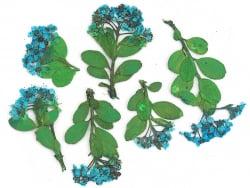 Planche de 6 fleurs - bleu