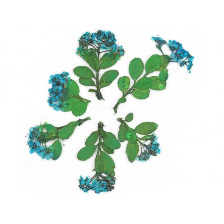 Acheter Planche de 6 fleurs - bleu - 4,59€ en ligne sur La Petite Epicerie - 100% Loisirs créatifs