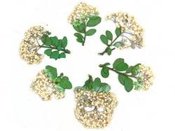 Planche de 6 fleurs - blanc