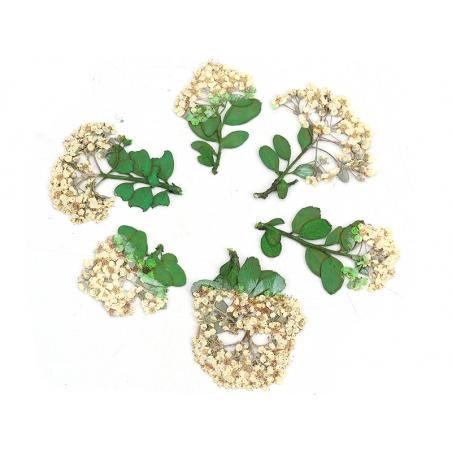 Acheter Planche de 6 fleurs - blanc - 4,59€ en ligne sur La Petite Epicerie - Loisirs créatifs