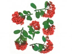 Planche de 6 fleurs - rouge