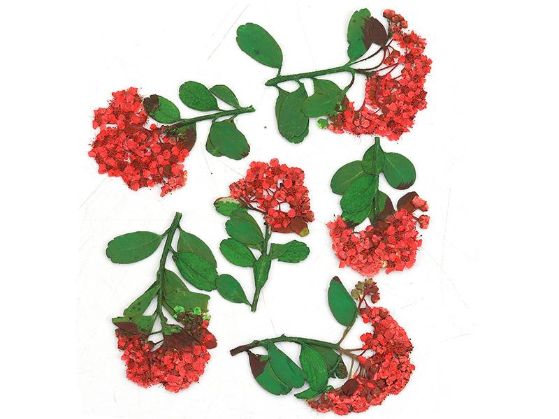 Acheter Planche de 6 fleurs - rouge - 4,59€ en ligne sur La Petite Epicerie - Loisirs créatifs