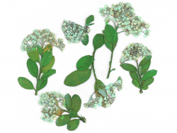 Planche de 6 fleurs - vert...