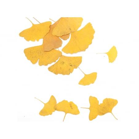 Acheter Planche de Gingkos pressés - 5,99€ en ligne sur La Petite Epicerie - Loisirs créatifs