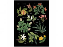 Affiche 20 x 25 cm - Herbier
