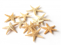 Acheter Lot de 10 mini étoiles de mer miniatures - 3,49€ en ligne sur La Petite Epicerie - 100% Loisirs créatifs
