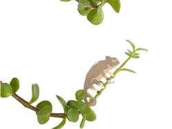 Acheter Bijou pour plantes - Caméléon - 7,99€ en ligne sur La Petite Epicerie - Loisirs créatifs