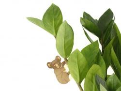 Acheter Bijou pour plantes - Koala - 7,99€ en ligne sur La Petite Epicerie - 100% Loisirs créatifs