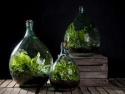 Acheter Bouteille terrarium 15 L set - 49,99€ en ligne sur La Petite Epicerie - Loisirs créatifs