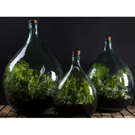 Acheter Bouteille terrarium 55 L set - 84,99€ en ligne sur La Petite Epicerie - Loisirs créatifs
