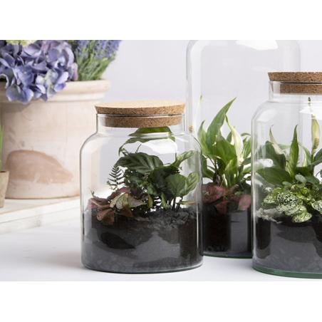 Acheter Bouteille terrarium semi ouvert M - 21,99€ en ligne sur La Petite Epicerie - Loisirs créatifs