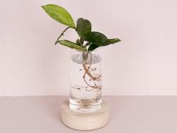 Acheter Vase en verre et socle en bois - spécial bouture avec éclairage LED - 21,19€ en ligne sur La Petite Epicerie - 100% ...