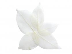 Acheter Lot de 5 feuilles pressées - blanc - 0,89€ en ligne sur La Petite Epicerie - Loisirs créatifs