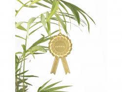 """Acheter Bijou pour plantes - Ruban """"Survivant"""" - 7,99€ en ligne sur La Petite Epicerie - Loisirs créatifs"""