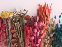 Acheter Brin de blé coloré - abricot - fleur séchée - 0,49€ en ligne sur La Petite Epicerie - Loisirs créatifs