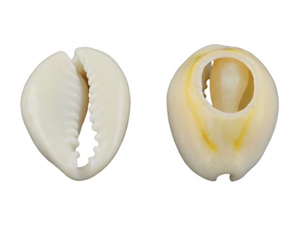 Acheter 10 perles coquillage cauri mélangées naturelles - 5 mm - 0,59€ en ligne sur La Petite Epicerie - Loisirs créatifs