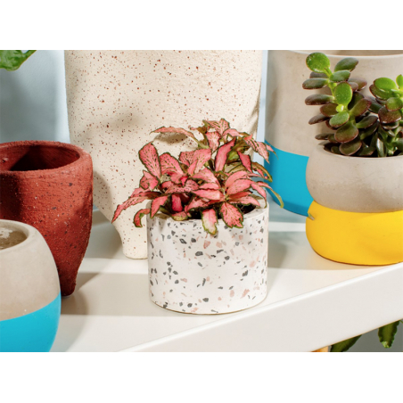 Acheter Petit pot terrazzo - 8 cm - 12,99€ en ligne sur La Petite Epicerie - Loisirs créatifs