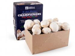 Acheter Kit de culture champignons de Paris bio (petit modèle) - 10,99€ en ligne sur La Petite Epicerie - Loisirs créatifs