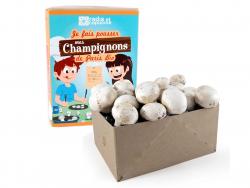 Acheter Kit pour enfants - Je cultive mes champignons bio - 10,99€ en ligne sur La Petite Epicerie - Loisirs créatifs