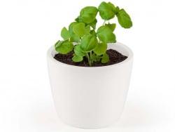 """Acheter Pot blanc 8 cm Basilic """"grand vert"""" bio à faire pousser - 5,49€ en ligne sur La Petite Epicerie - Loisirs créatifs"""