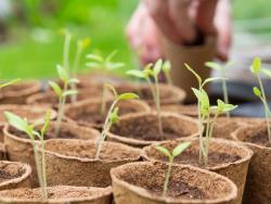 Acheter Coffret 12 sachets Plantes bien-être - 14,99€ en ligne sur La Petite Epicerie - Loisirs créatifs