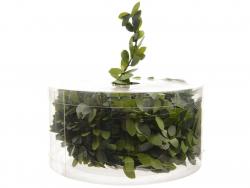 Acheter Guirlande verte - effet végétal buis - 7,5 m - 3,49€ en ligne sur La Petite Epicerie - Loisirs créatifs